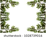 leaves flacourtia background... | Shutterstock . vector #1028739016