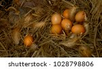 eggs are human food. protein is ... | Shutterstock . vector #1028798806