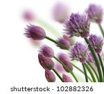 Chive Herb Flowers On White Background - stock photo