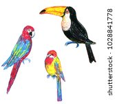drawing exotic birds  toucan... | Shutterstock . vector #1028841778