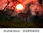 sunrise in brazil. evening sun  ... | Shutterstock . vector #1028906002
