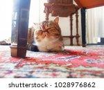 sleeping cat in the house ... | Shutterstock . vector #1028976862