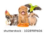 group of pets together in front ... | Shutterstock . vector #1028989606