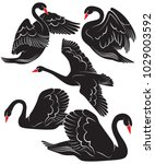 Vector Collection Of Black Swans