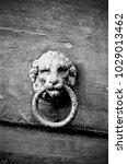 knocker in metal lion's head on ... | Shutterstock . vector #1029013462