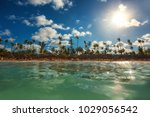 palm trees on the tropical... | Shutterstock . vector #1029056542