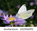 Green Veined White Butterfly O...