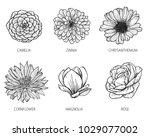 Camelia  Zinnia  Chrysanthemum  ...
