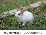 Stock photo rabbit pet green 1029089848