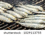 delicious barbecued sardines  ... | Shutterstock . vector #1029113755