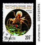 Small photo of MOSCOW, RUSSIA - NOVEMBER 26, 2017: A stamp printed in Congo shows Tarantula (Family: Theraphosidae), Insects serie, circa 1994