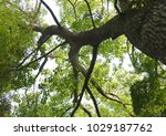tree in the eastern china | Shutterstock . vector #1029187762
