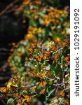 monarch butterfly biosphere... | Shutterstock . vector #1029191092