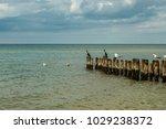 Cormorants Standing On The...