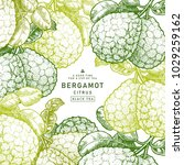 fresh bergamot design template. ... | Shutterstock .eps vector #1029259162