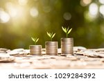 three seedlings were growing on ...   Shutterstock . vector #1029284392