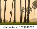a one farmer climb the tree in... | Shutterstock . vector #1029343672