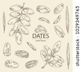 collection of date fruit ... | Shutterstock .eps vector #1029349765