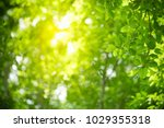 closeup nature view of green... | Shutterstock . vector #1029355318