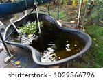 fish pond in house at waialua... | Shutterstock . vector #1029366796