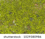 wet the surface of the stone... | Shutterstock . vector #1029380986
