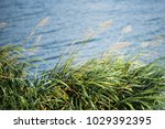 nature  background with coastal ... | Shutterstock . vector #1029392395