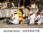 balinese people do a wedding... | Shutterstock . vector #1029404728