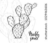 hand drawn prickly pear ... | Shutterstock .eps vector #1029463606