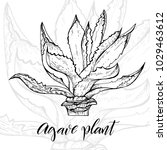 hand drawn agave  main tequila...   Shutterstock .eps vector #1029463612