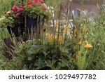 summer  in the garden near the... | Shutterstock . vector #1029497782
