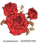 Stock vector blooming red roses flowers detailed hand drawn vector illustration romantic decorative flower 1029503782
