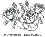 Stock vector blooming roses flowers detailed hand drawn vector illustration romantic decorative flower 1029503812