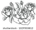 blooming roses flowers  ... | Shutterstock .eps vector #1029503812