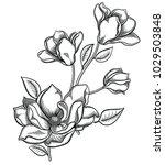 blooming apple tree flowers... | Shutterstock .eps vector #1029503848
