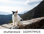 Stock photo formidable white with a black cat sitting on a rock in the background of the mountains 1029579925