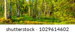 panorama of the wild enchanted... | Shutterstock . vector #1029614602