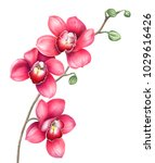 Pink Orchid Branch Isolated On...