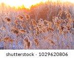 fantastic outdoor sunrise on... | Shutterstock . vector #1029620806