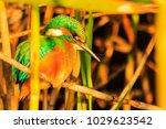 beautiful wild bird with... | Shutterstock . vector #1029623542
