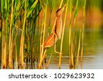 bird disguised among the... | Shutterstock . vector #1029623932