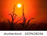 field plants stretch to the sun ... | Shutterstock . vector #1029628246