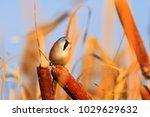 cute beautiful wild bird  ... | Shutterstock . vector #1029629632
