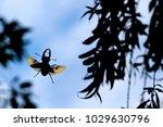 beetle deer in flight over... | Shutterstock . vector #1029630796
