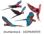 Red And Green Macaw Flying...