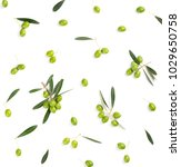 top view of fresh green olive... | Shutterstock . vector #1029650758