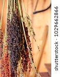 Stalks Of Broom Corn
