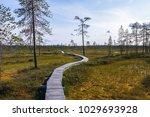 a long narrow boardwalk winds...   Shutterstock . vector #1029693928