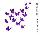 beautiful monarch butterfly... | Shutterstock . vector #1029696652