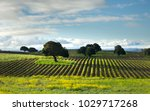 the napa valley vineyard rows... | Shutterstock . vector #1029717268