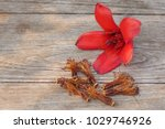 red cotton tree flowers on... | Shutterstock . vector #1029746926